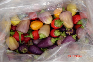 Chinese Five Colour Pepper